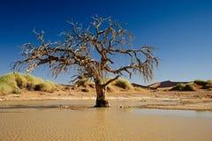 Árvore dentro da água na paisagem do deserto de Namib Foto de Stock