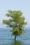 Árvore dentro da inundação da água fotos de stock royalty free