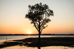 A árvore dentro do rio, noite, fundo do por do sol Fotografia de Stock