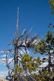 Árvore desencapada Imagens de Stock Royalty Free