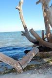 Árvore desencapada Foto de Stock Royalty Free