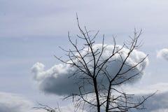 Árvore desencapada com nuvem Fotos de Stock