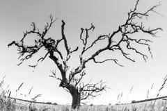 Árvore desencapada em Austrália, Território do Norte, lente de fisheye imagem de stock