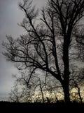Árvore desencapada no crepúsculo Fotos de Stock