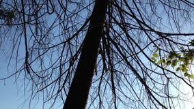 Árvore desencapada que balança lentamente no vento filme