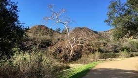 Árvore desencapada velha Imagem de Stock Royalty Free