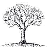 Árvore desencapada (vetor) Fotos de Stock Royalty Free