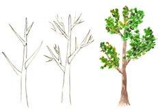 Árvore desenhada Fotografia de Stock Royalty Free