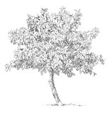 Árvore desenhada mão ilustração stock