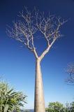 Árvore despida Fotos de Stock Royalty Free