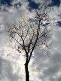 Árvore despida Fotos de Stock