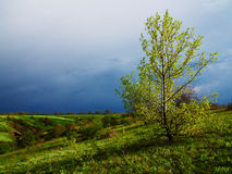 Árvore destacada Foto de Stock