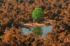 Árvore diferente foto de stock
