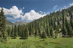 Árvore do álamo tremedor da paisagem nas montanhas Fotos de Stock Royalty Free