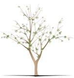 Árvore do algodão ilustração royalty free