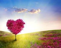 Árvore do amor fotos de stock