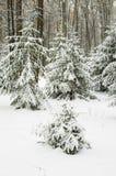 Árvore do ano novo Fotos de Stock Royalty Free