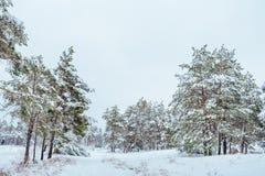 Árvore do ano novo na paisagem bonita do inverno da floresta do inverno com árvores cobertos de neve Árvores cobertas com o hoarf Imagem de Stock