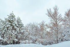 Árvore do ano novo na paisagem bonita do inverno da floresta do inverno com árvores cobertos de neve Árvores cobertas com o hoarf Fotos de Stock Royalty Free