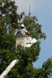 Árvore do aparamento do Arborist Fotos de Stock Royalty Free
