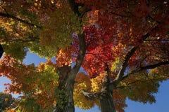 Árvore do arco-íris Imagens de Stock Royalty Free