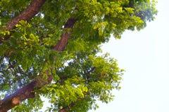 Árvore do céu imagem de stock