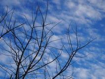 Árvore do céu Imagens de Stock