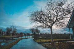Árvore do céu azul Fotografia de Stock