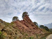 Árvore do céu da montanha Fotografia de Stock Royalty Free