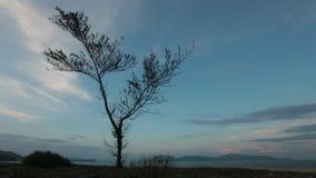 Árvore do céu da noite do por do sol do lapso de tempo filme