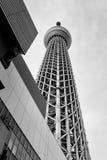 Árvore do céu de Tokyo, Japão Foto de Stock