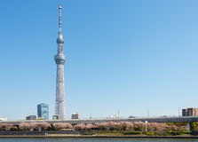 Árvore do céu de Toyko Imagens de Stock