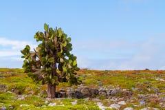 Árvore do cacto Imagem de Stock Royalty Free