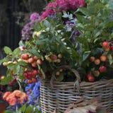 Árvore do coalho na cesta de vime Imagem de Stock Royalty Free