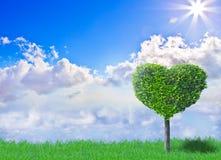 Árvore do coração Fotografia de Stock