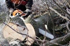 Árvore do corte do lenhador imagem de stock royalty free