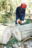 Árvore do corte do lenhador na floresta Fotos de Stock