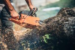 A árvore do corte do lenhador usando o equipamento profissional, gasolina pôs a serra de cadeia Foto de Stock Royalty Free