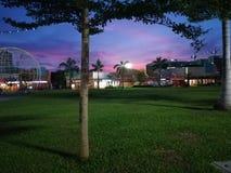 Árvore do crepúsculo fotos de stock