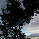 Árvore do crepúsculo foto de stock royalty free