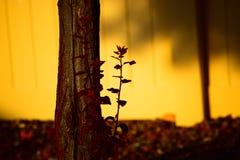 Árvore do crepúsculo Imagem de Stock Royalty Free