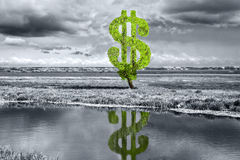 Árvore do dólar Imagem de Stock Royalty Free