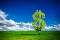 Árvore do dólar Fotos de Stock Royalty Free