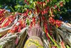 Árvore do desejo Ásia maneira tradicional a adoração dos espírito Imagens de Stock Royalty Free