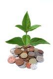 Árvore 2 do dinheiro Fotografia de Stock Royalty Free