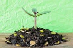 A árvore do dinheiro brotou fora da terra com moedas em um fundo verde Fotografia de Stock Royalty Free