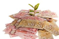 Árvore do dinheiro de Canadá Fotos de Stock