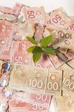 Árvore do dinheiro de Canadá Fotografia de Stock