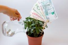 Árvore do dinheiro do cuidado Fotos de Stock
