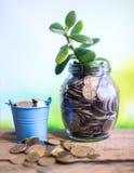 Árvore do dinheiro em um frasco de vidro em um fundo borrado Conceito do negócio do sucesso Imagens de Stock Royalty Free